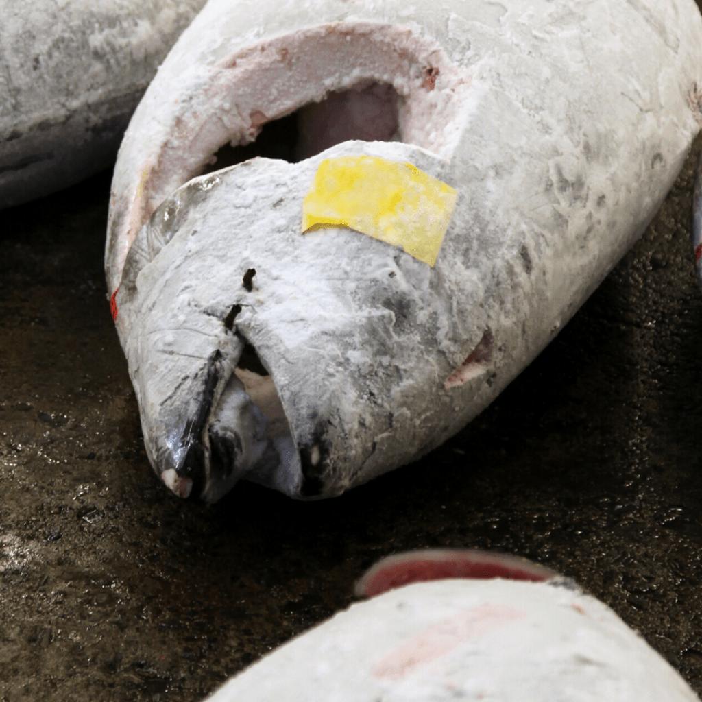 tuna frozen