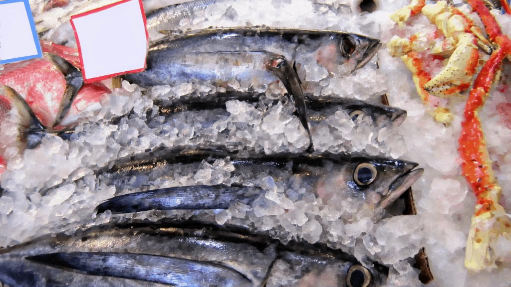 albacore tunas