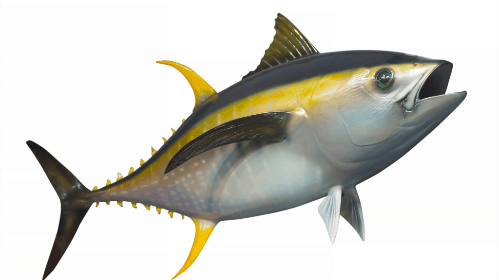 yellowfin tunafish